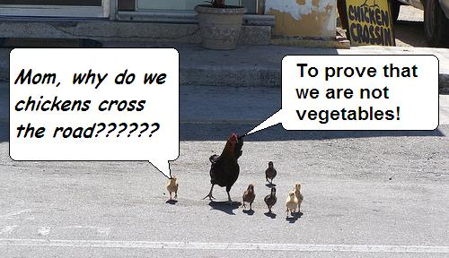 The real reason why Argentine chickens cross the road