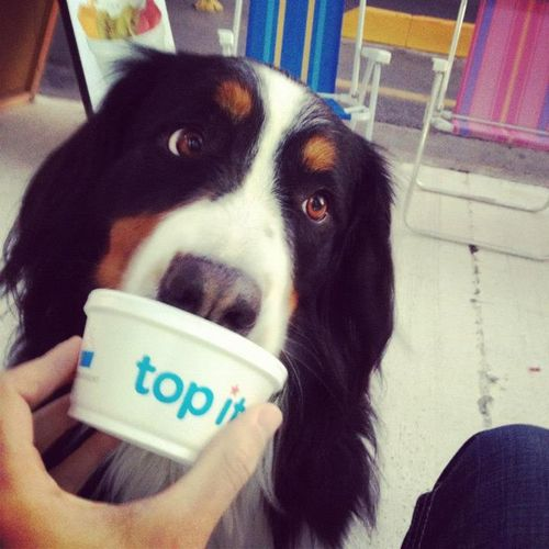 top-it-cute-dog-buenos-aires