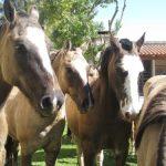 Spend a Day in Argentine Gaucho Heartland
