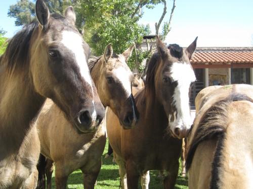 talk-to-el-ombu-horses