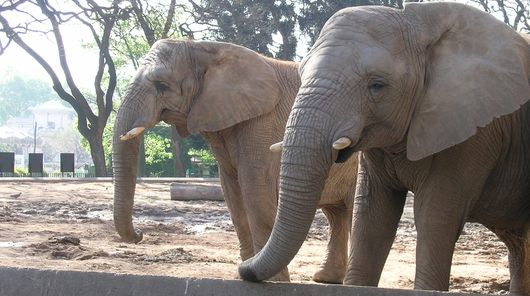 Elephants at Buenos Aires Zoo