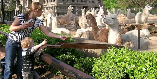 Feeding time at the Buenos Aires Zoo