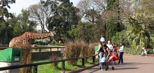 Giraffe at Buenos Aires Zoo
